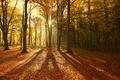 Картинка осень, лес, солнце, лучи, свет, деревья, природа, листва, тени