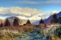 Картинка заморозки, горы, иней, деревья, вершины, ели, снежные, трава