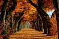 Картинка деревья, осень, листья