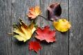 Картинка осень, листья, дерево, доски, желтые, оранжевые, бордовые, багровые