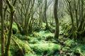 Картинка лес, деревья, мох, Дербишир, Англия