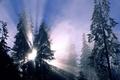 Картинка Лес, лучи, ёлка, зима
