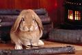 Картинка Кролик, русый, дрова, печка