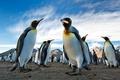 Картинка королевские, земля, горы, пингвины, колония, Южная Георгия, небо, Антарктида