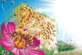 Картинка цветы, соты, пчела