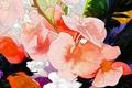 Картинка цветы, клумба, лепестки, сад