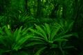 Картинка forest, plants, leaf, green