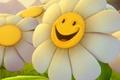 Картинка Ромашка, улыбка, цветок