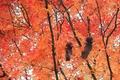 Картинка листья, деревья, ветви, белки