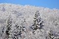 Картинка ель, склон, снег, зима, небо, лес