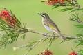 Картинка цветок, ветка, клюв, хвост, птица