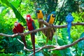 Картинка птицы, ветки, зелень, попугаи