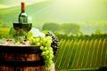Картинка поля, бутылка, плантации, бочка, вино, пробки, бокалы, виноград, пейзаж