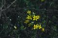 Картинка Крокусы, Макро, Цветение