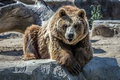 Картинка камни, морда, шерсть, зоопарк, медведь, взгляд