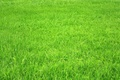 Картинка зелёное, трава, поле