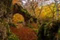 Картинка осень, лес, листья, деревья, Испания, Страна Басков, Urabain