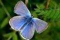 Картинка Бабочка, зеленый, синий