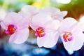 Картинка цветы, макро, orchid, орхидея