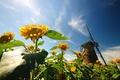 Картинка цветы, flowers, широкоэкранные, HD wallpapers, мельница, обои, листья, полноэкранные, background, fullscreen, широкоформатные, цветочки, фон, природа, ...