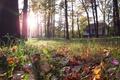 Картинка макро, деревья, листья, зеленая трава, домик, лучи солнца, осень, блик.