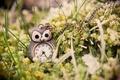 Картинка трава, макро, сова, часы, кулон, зеленая, подвеска