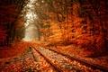 Картинка природа, листва, тил-шифт, рыжая осень, железная дорога