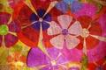 Картинка ярко, цветы, разноцветие, текстура, фон