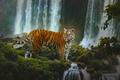 Картинка лес, тигр, водопады