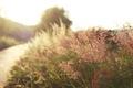 Картинка солнце, трава, дорога