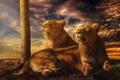 Картинка львицы, обработка, Hakuna Matata