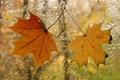 Картинка осень, окно, листья