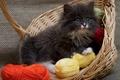 Картинка корзина, нитки, пушистый, котенок