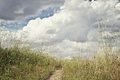 Картинка цветы, тропинка, поле, небо, трава, облака