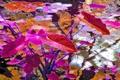 Картинка цвет, вектор, рендеринг, рисунок, водоем, листья