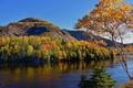 Картинка лес, река, Канада, осень, Canada, Newfoundland, Ньюфаундленд, деревья, горы
