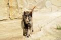 Картинка кошка, стиль, элегантность, камуфляж