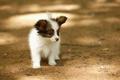 Картинка собака, щенок, обои от lolita777, одинокий, солнечные блики, маленький, на улице, глупый
