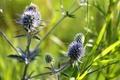 Картинка цветы, Природа, травы
