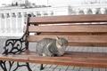 Картинка море, кошка, скамейка, кот