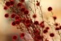 Картинка цветы, природа, растение