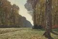 Картинка пейзаж, дерево, Дорога из Шайи, картина, Клод Моне