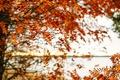 Картинка autumn, fall, leaves, tree, branches, foliage