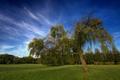 Картинка Новая Зеландия, HDR, небо, дерево, облака