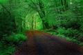 Картинка дорога, лес, деревья, тоннель