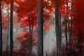 Картинка пейзаж, лес, природа