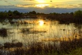 Картинка вечер, озеро, болото, деревья, закат