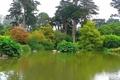 Картинка Botanical Garden, парк, ботанический сад, San Francisco, деревья, Golden Gate Park, пруд