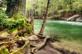 Картинка дерево, коряга, речка, лес