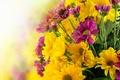 Картинка цветы, flowers, chrysanthemums, bouquet, букет, хризантемы